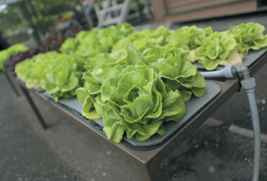 Cover Story: Urban farming made easy | The Edge Markets