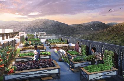Ramah-Pavilion-rooftop-farming-deck_cc6_1068