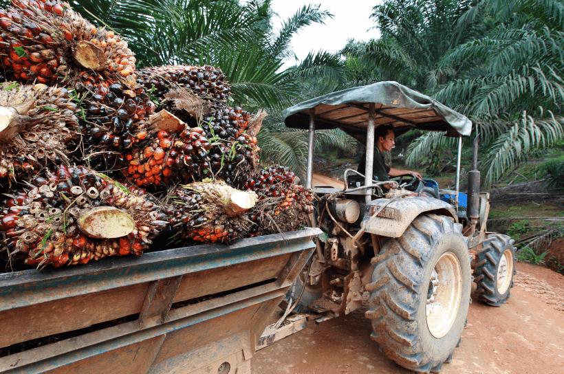 palm-oil_agi_mm10_tem1083_theedgemarkets