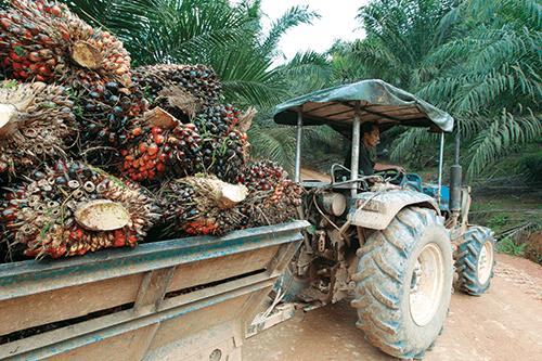 palm_oil_theedgemarkets