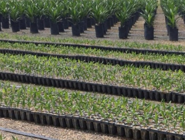 Golden Agri-Resources enhances sugar trading business with new Brazilian subsidiary - THE EDGE SINGAPORE